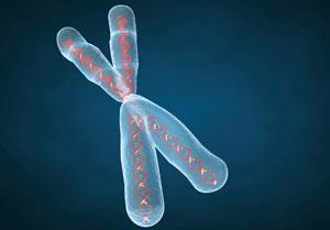 chromosome-300
