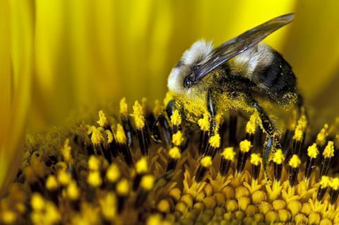 Pollinators_shutterstock_57509821_630m