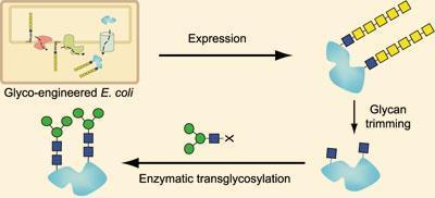 glycoprotein-400
