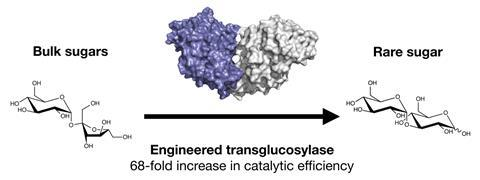 An image showing a mutant transglycosylase able to produce a rare sugar