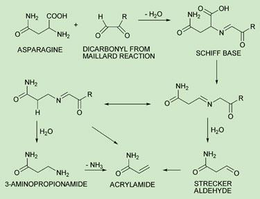 Fries to go | Feature | Chemistry World