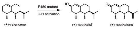 Nootkatone chemical synthesis