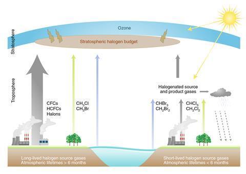 A scheme showing long-lived and short-lived halogen source gases
