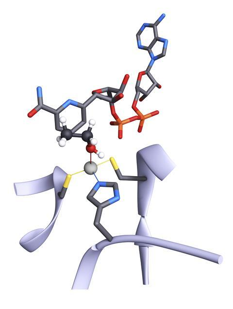 An image showing the active site of the alcohol dehydrogenase enzyme