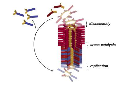 An illustration of the parasitic-behaviour of self-replicating molecules