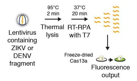 Nucleic acid detection with CRISPR - Fig2c