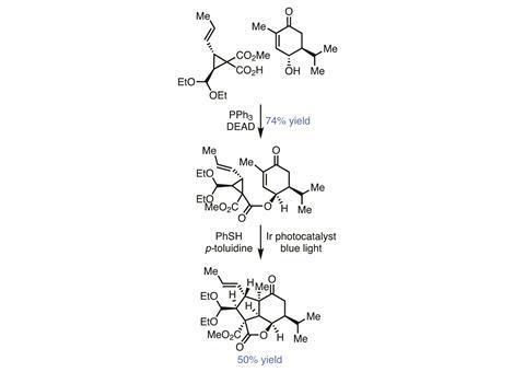 Organic Matter - Pavidolide, Fig 2