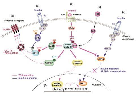 Chemical pathway