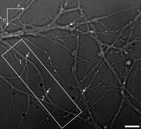 nanodiamond neuron tracking f1 d