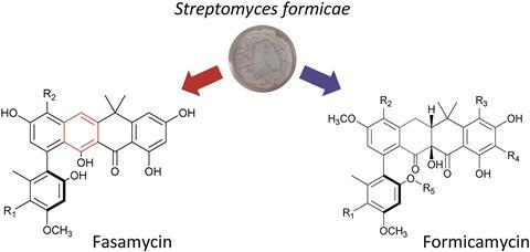 Formicamycins and fasamycins have a similar chemical scaffold