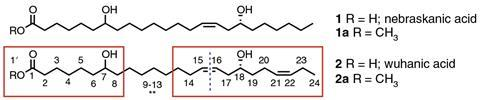 Structures of the very-long-chain dihydroxy fatty acids from O. violaceus seed oil