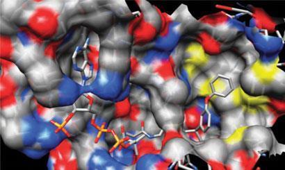 Ibuprofen: anticancer drug-410