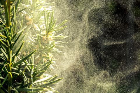 Plant releasing pollen
