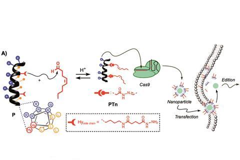 Peptide/Cas9 nanostructures for ribonucleoprotein cell membrane transport and gene edition
