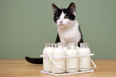 Young black and white cat with bottles of milk