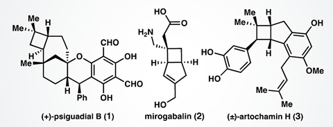 An image showing natural products that feature the cyclobutane motif