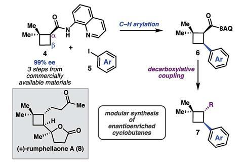 A scheme showing a C–H functionalization strategy to access (+)-rumphellaone A