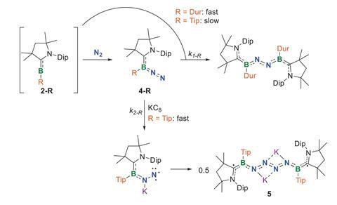 A scheme showing the proposed mechanism for the fixation of N2 by 2-Dur and the catenation of N2 by 2-Tip
