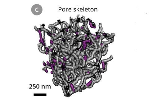 3D rendering of the skeletonized pore structure. Dead-end pores are marked in magenta.