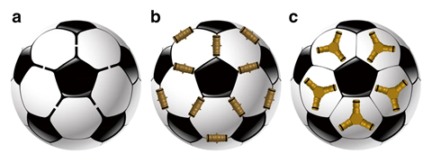 An image showing three strategies for capsid formation from pentatopic tectons using the common image of a soccer ball