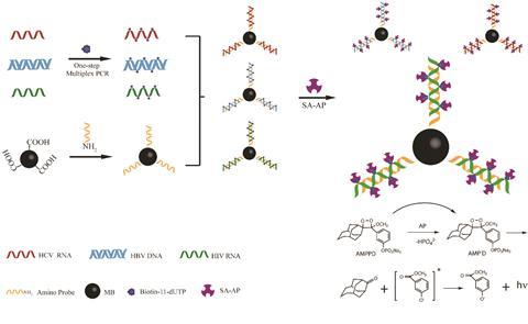 Illustration of one step multiplex RT-PCR and chemiluminescence detection of multiple viruses.