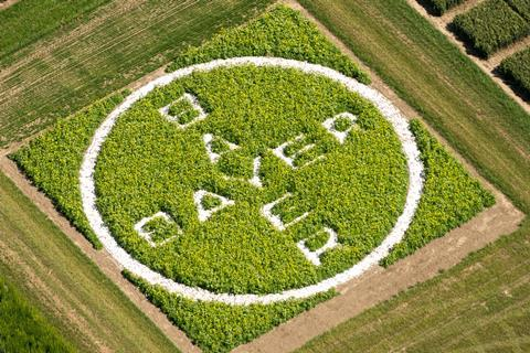 An image showing the Bayer logo letters written on a grass lawn