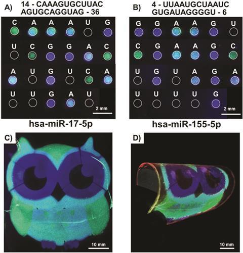 quaternary code for RNA nucleotide sequences
