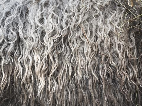 Woolen fleece
