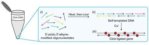 gene synthesis reaction diagram