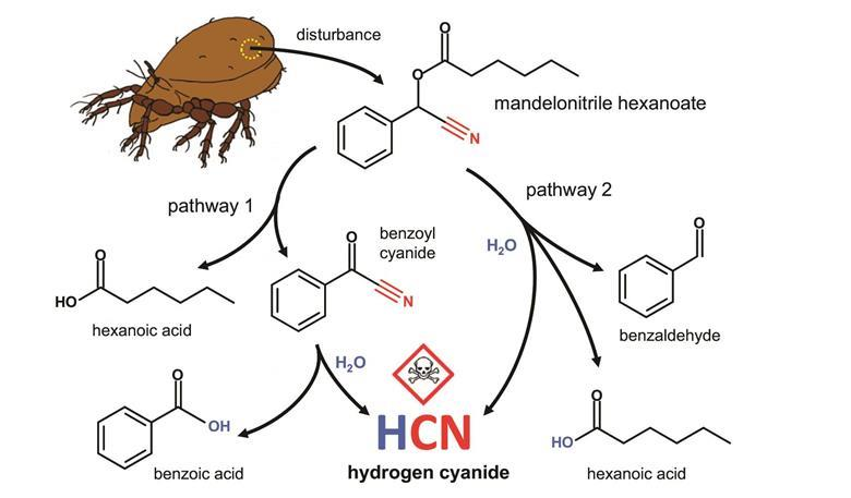 Mighty mite make HCN